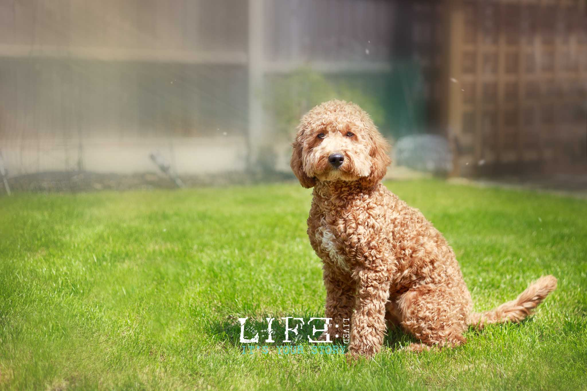 lincoln-pet-child-photographer-1