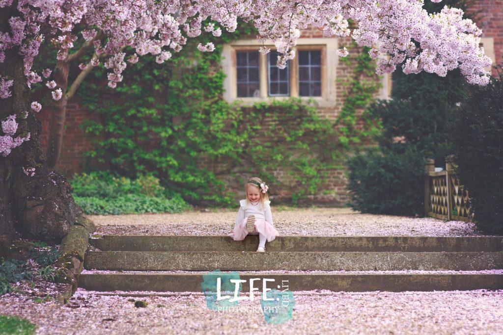 cherry blossom lincoln