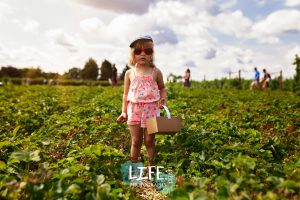 strawberry picking life lived photography