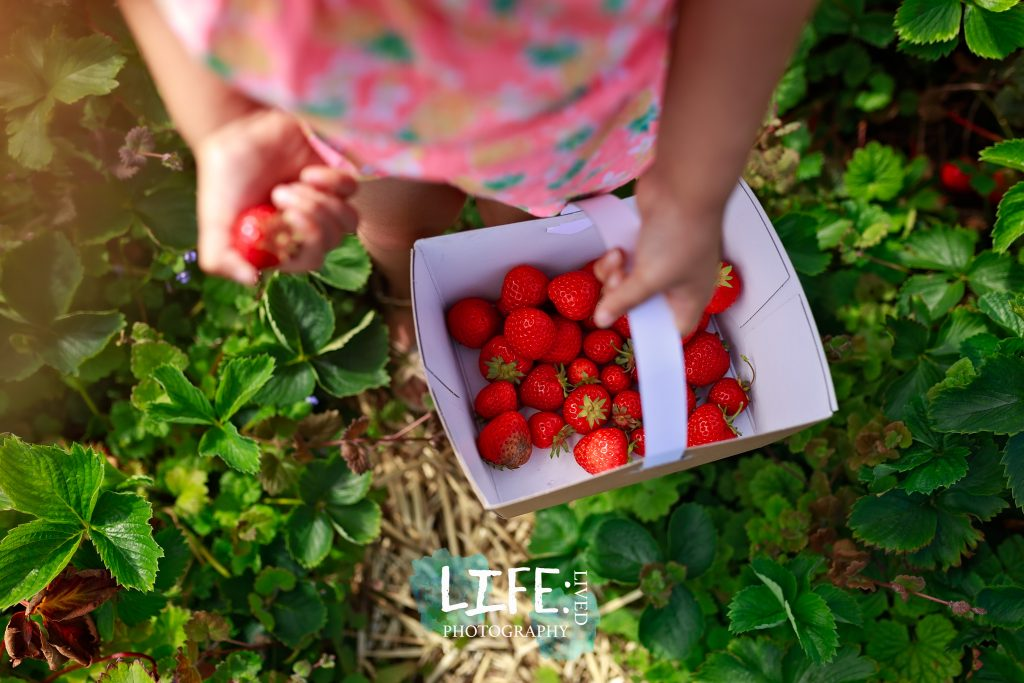 strawberry picking syston