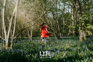 bluebell_wood_lincoln